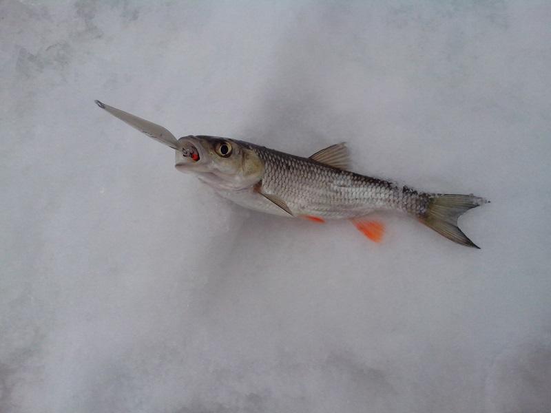 Рыбалка где-то здесь